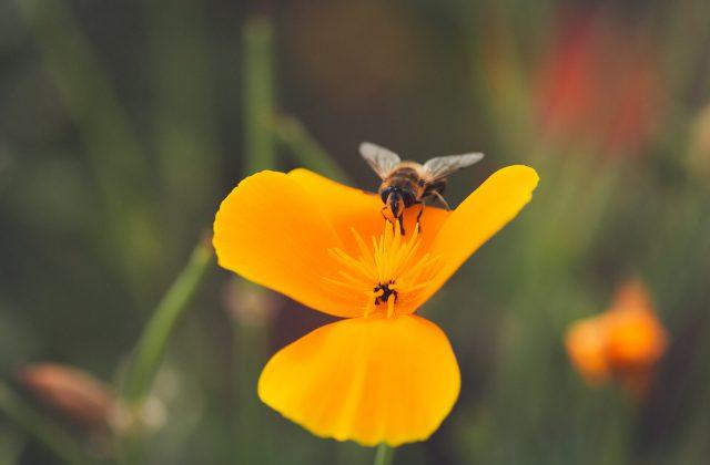 Bienenglück
